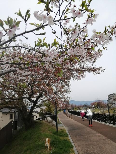 f:id:shibainumugi:20200413074457j:image