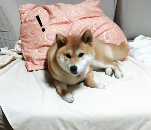 f:id:shibainumugi:20200416075031j:image