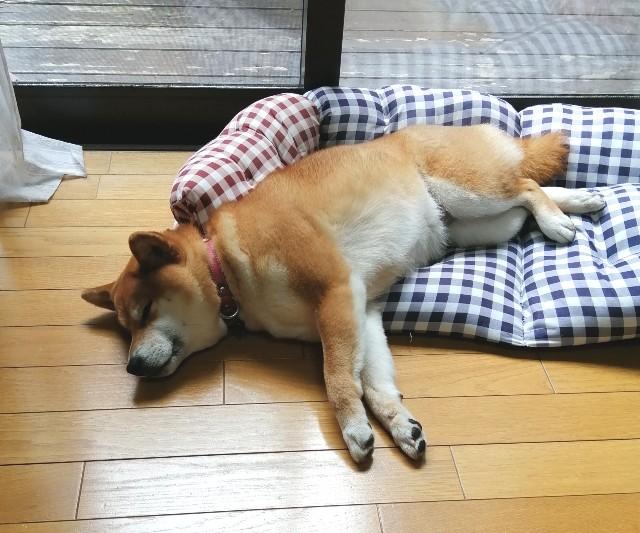 f:id:shibainumugi:20200420150727j:image