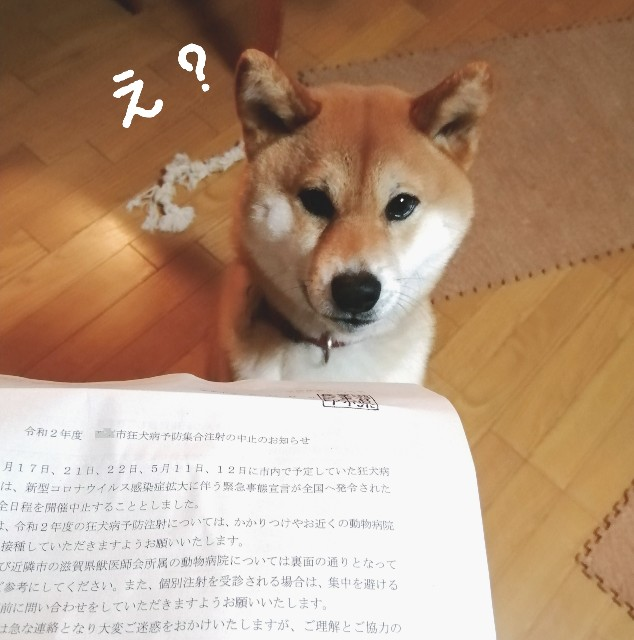 f:id:shibainumugi:20200421222226j:image