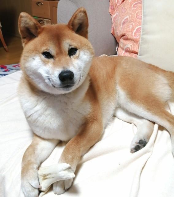 f:id:shibainumugi:20200429104450j:image