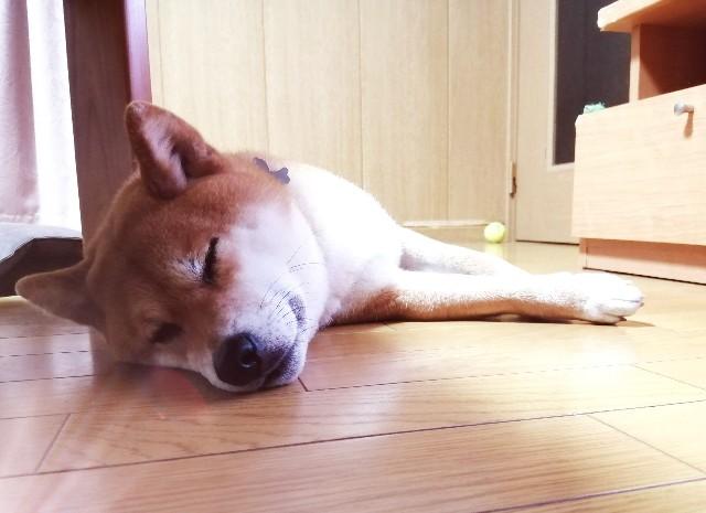 f:id:shibainumugi:20200429104538j:image