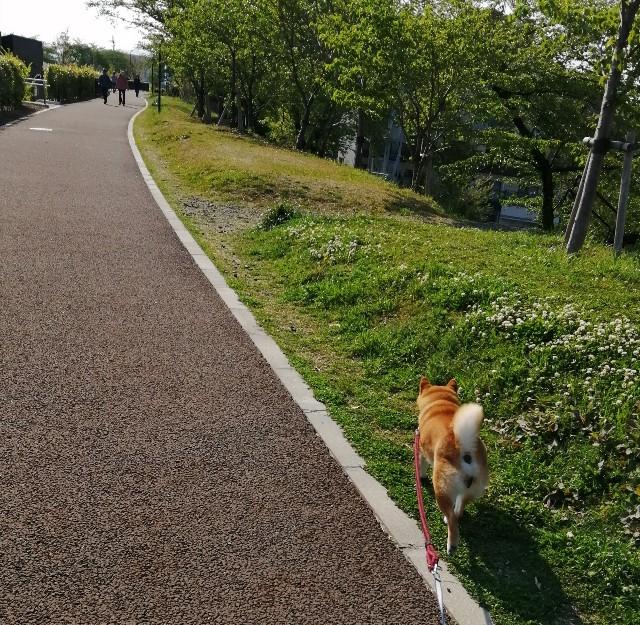 f:id:shibainumugi:20200501080004j:image