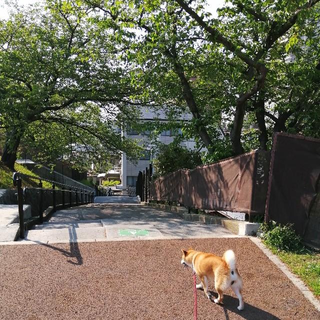 f:id:shibainumugi:20200501080023j:image