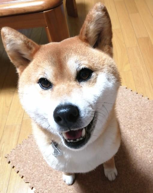 f:id:shibainumugi:20200507210928j:image