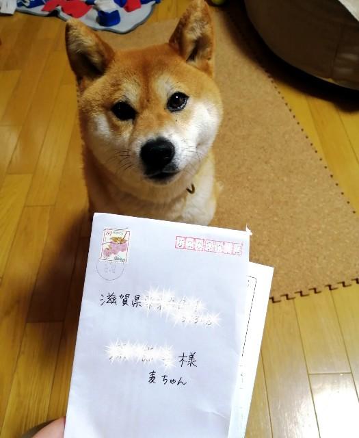 f:id:shibainumugi:20200526102027j:image