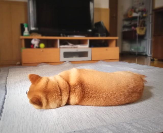 f:id:shibainumugi:20200528215613j:image