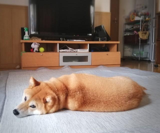 f:id:shibainumugi:20200530113945j:image