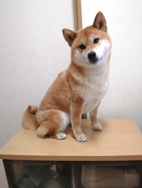 f:id:shibainumugi:20200601123553j:image