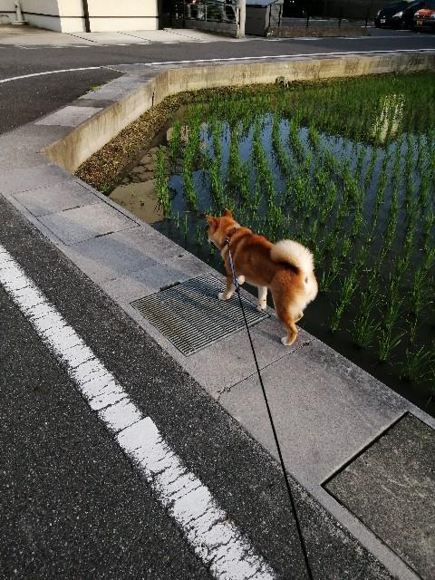 f:id:shibainumugi:20200602222007j:image