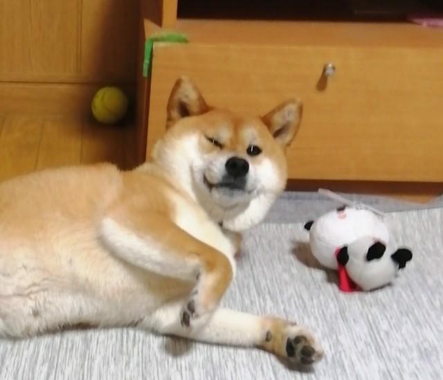 f:id:shibainumugi:20200602230324j:image