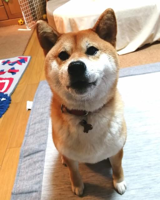 f:id:shibainumugi:20200607191811j:image