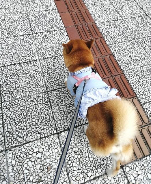 f:id:shibainumugi:20200620134402j:image