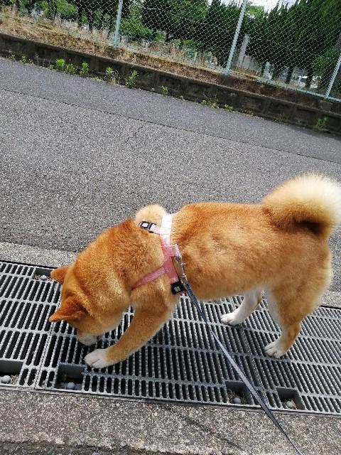 f:id:shibainumugi:20200622103209j:image