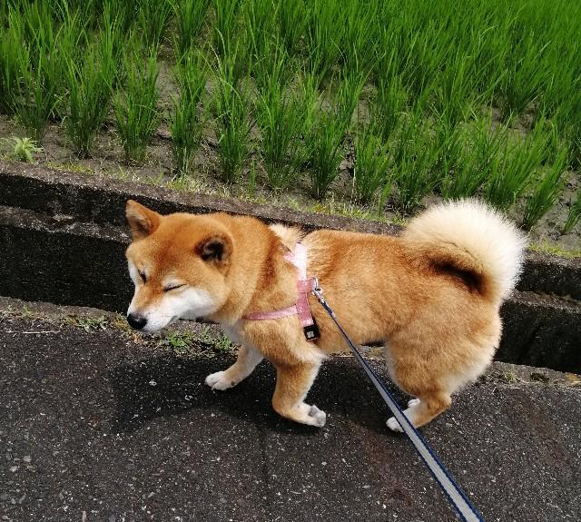 f:id:shibainumugi:20200622103239j:image