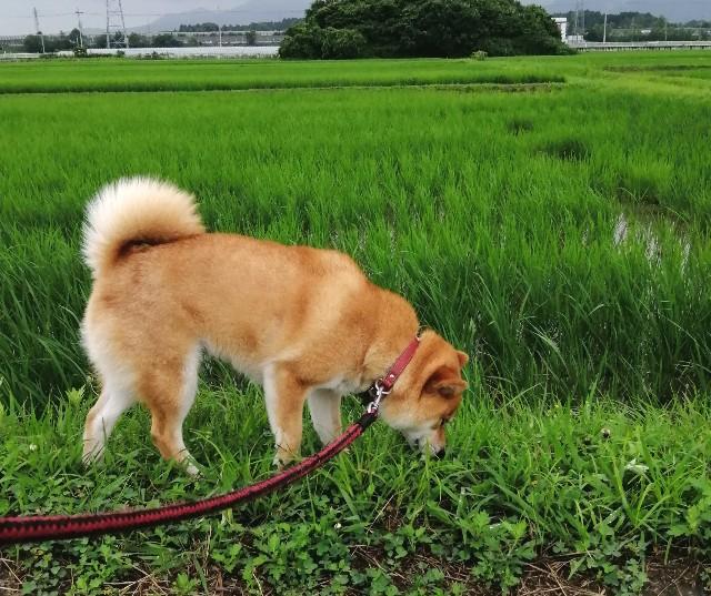 f:id:shibainumugi:20200703103043j:image