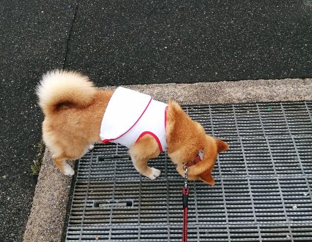 f:id:shibainumugi:20200708115808j:image