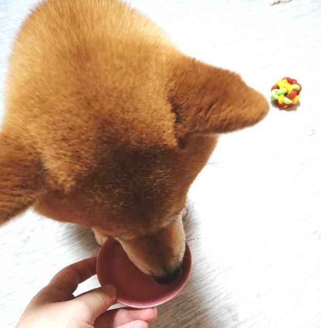 f:id:shibainumugi:20200713075634j:image