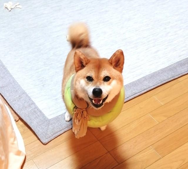 f:id:shibainumugi:20200719091811j:image