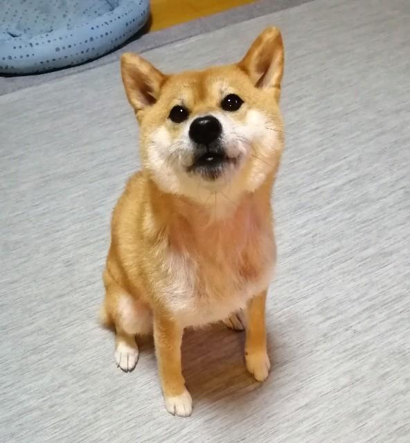 f:id:shibainumugi:20200723131310j:image