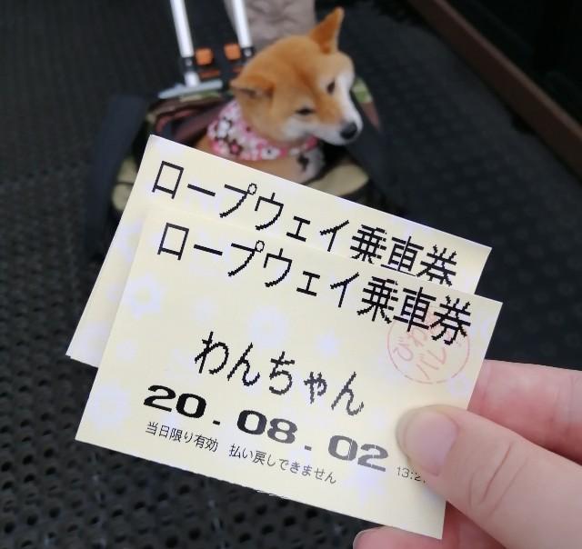 f:id:shibainumugi:20200803153650j:plain
