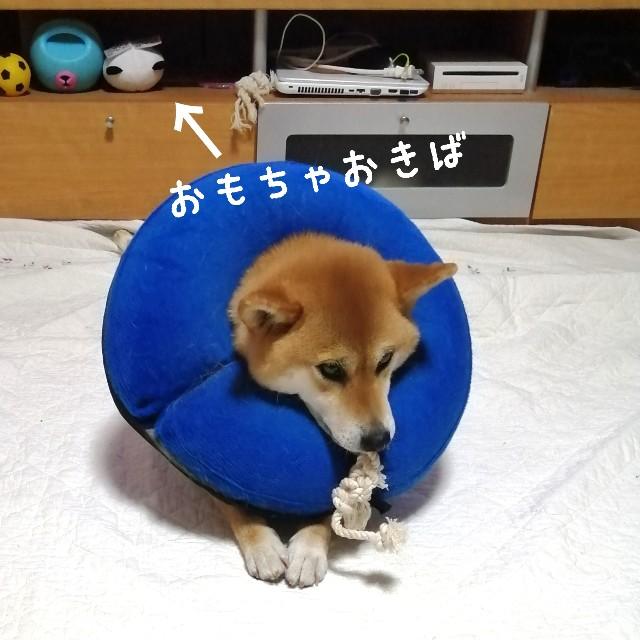 f:id:shibainumugi:20200806225149j:image