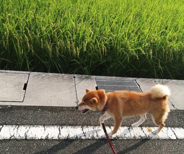 f:id:shibainumugi:20200814092228j:image