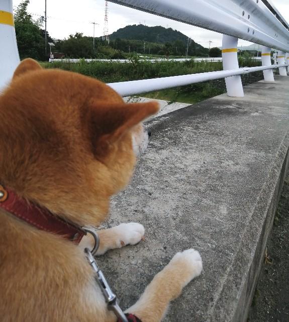 f:id:shibainumugi:20200814092333j:image