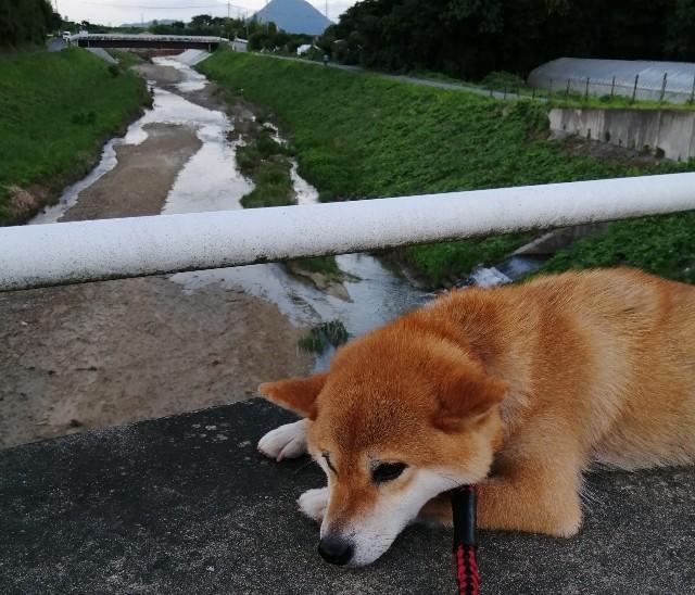 f:id:shibainumugi:20200814092347j:image