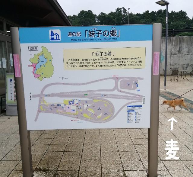 f:id:shibainumugi:20200910120707j:image