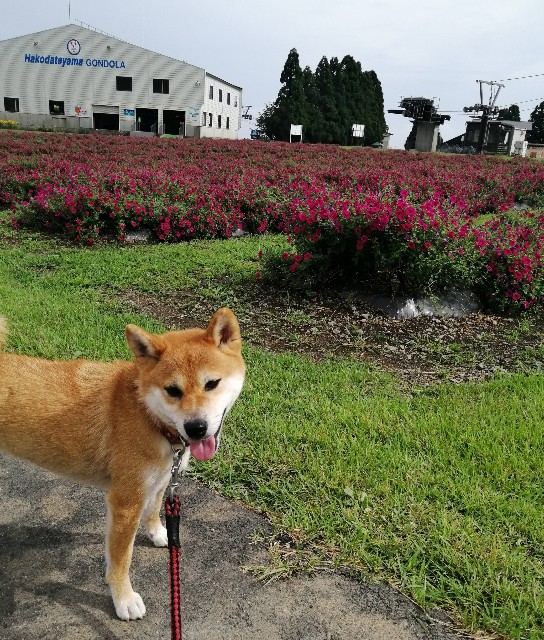 f:id:shibainumugi:20200910123359j:image