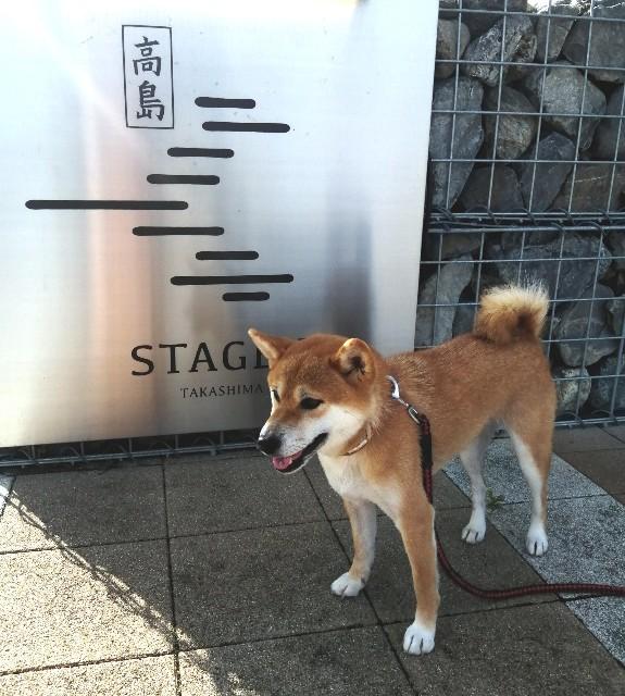 f:id:shibainumugi:20200912094601j:image