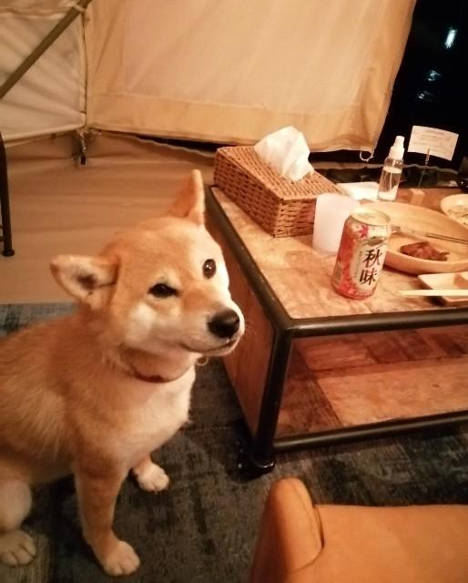 f:id:shibainumugi:20200912095839j:image
