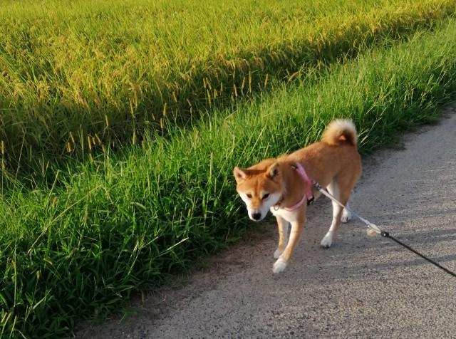 f:id:shibainumugi:20200915080950j:image