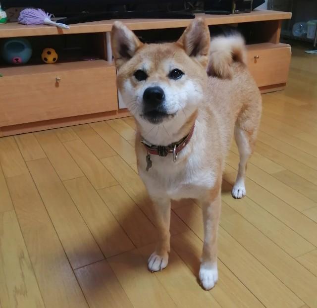 f:id:shibainumugi:20200917151857j:image