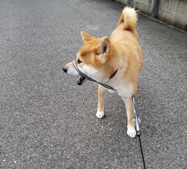 f:id:shibainumugi:20201001191412j:image