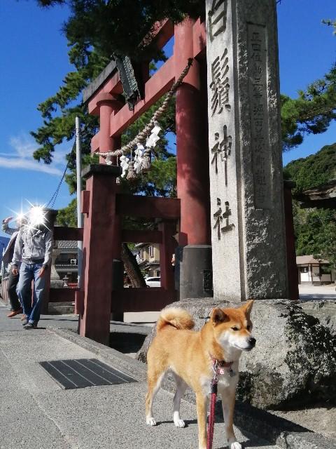 f:id:shibainumugi:20201020140245j:image