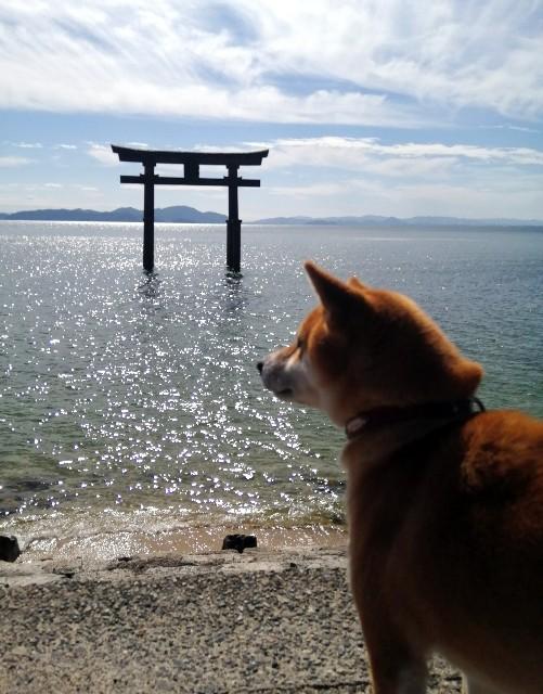 f:id:shibainumugi:20201020140256j:image
