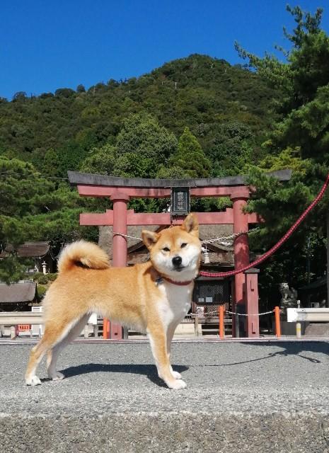 f:id:shibainumugi:20201020140308j:image