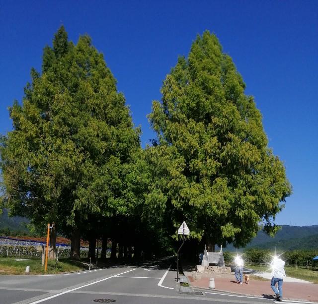 f:id:shibainumugi:20201020140340j:image