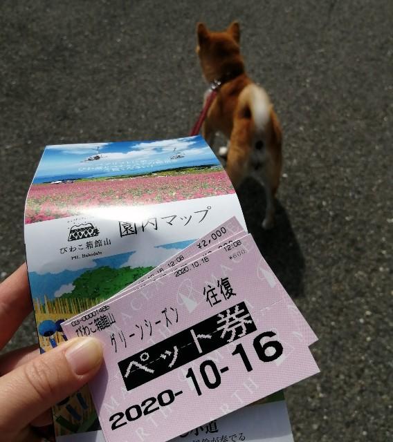 f:id:shibainumugi:20201020140412j:image