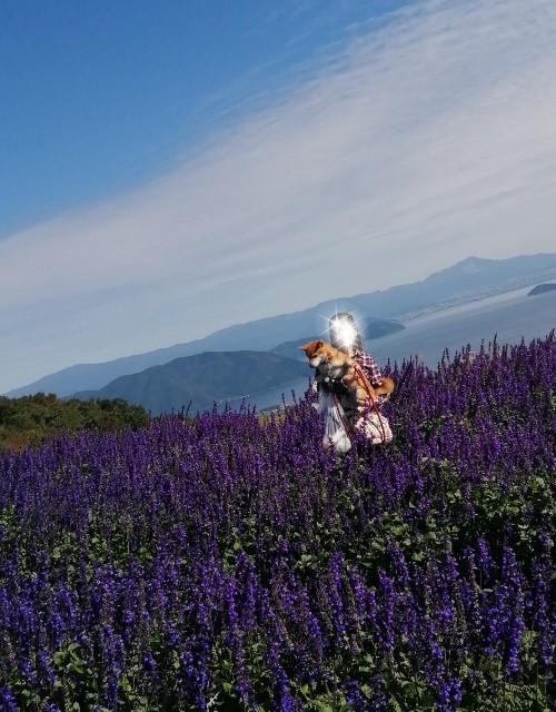 f:id:shibainumugi:20201020140456j:image
