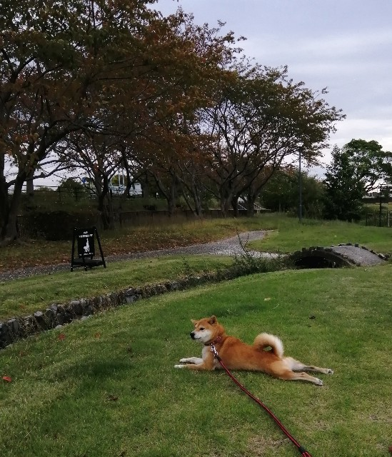 f:id:shibainumugi:20201023090556j:image