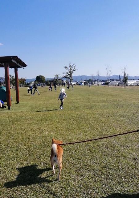 f:id:shibainumugi:20201026135349j:image