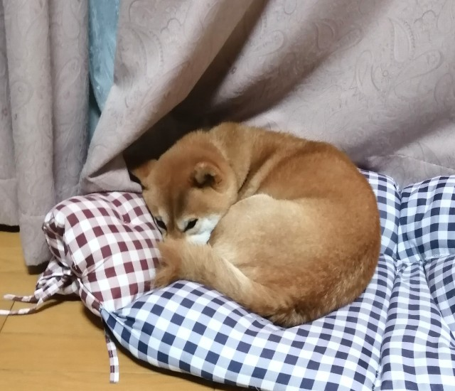 f:id:shibainumugi:20201105204808j:image