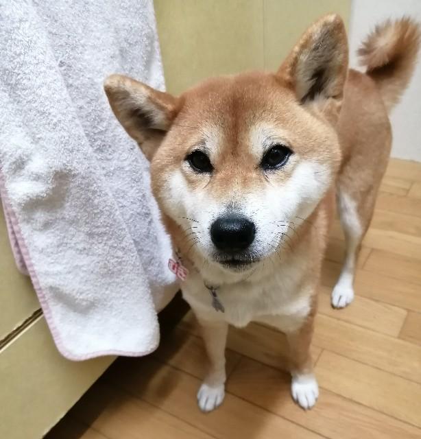 f:id:shibainumugi:20201109192745j:image