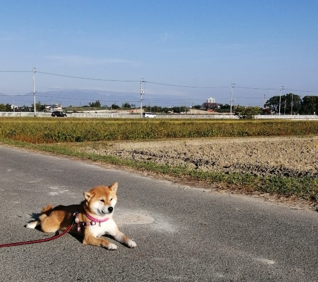 f:id:shibainumugi:20201115103946j:image