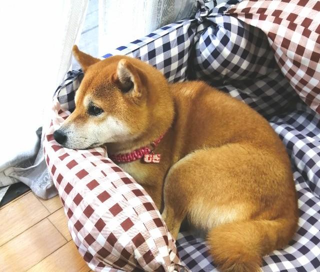f:id:shibainumugi:20201117090427j:image