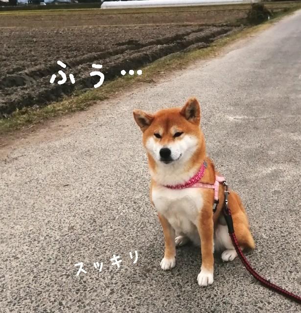 f:id:shibainumugi:20201126173616j:image
