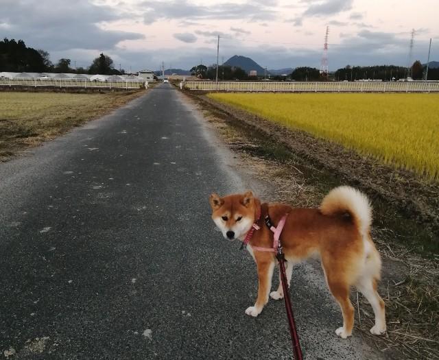 f:id:shibainumugi:20201202130314j:image